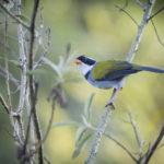 observação de aves - ecoturismo