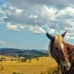 Passeio a Cavalos Fazendas Históricas do Mangalarga Marchador