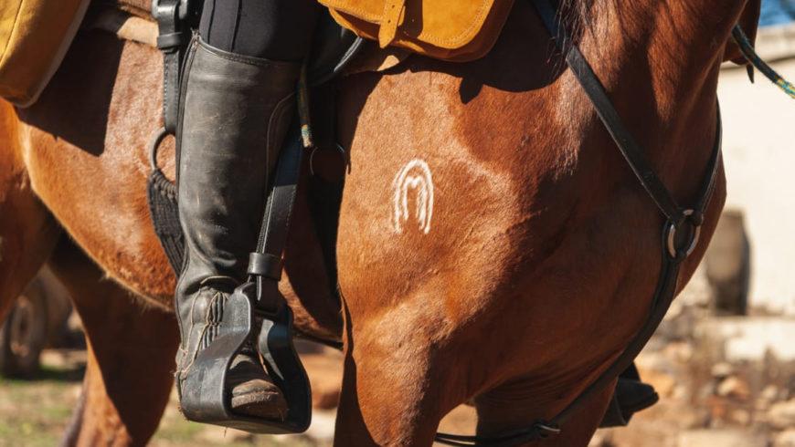 História do Cavalo Margalarga Marchador