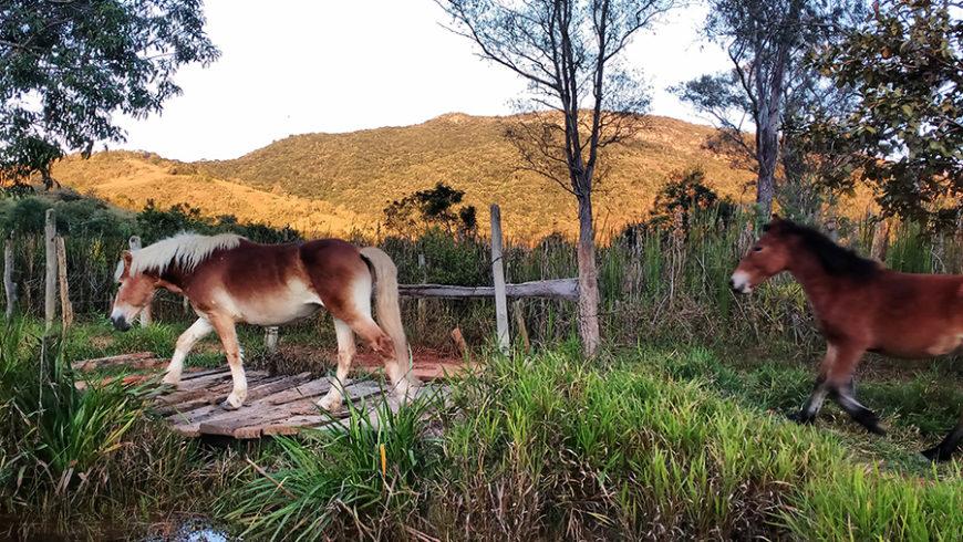 Conheça o Ciclo de Vida do Cavalo